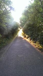 Lovely Autumn evening light
