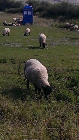 Yes.  Sheep and the Tardis in the field next to my home.  I don't get it, either.