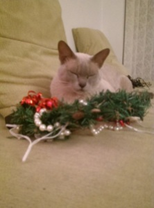 'Helping' by sleeping on the decorations.